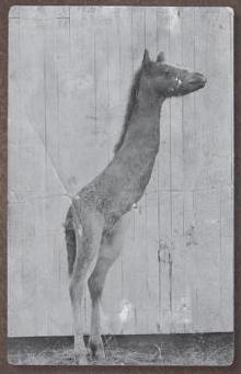 deirdre_the_emu-raffe